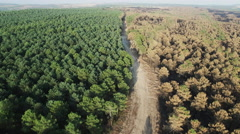 Burnt and safe pine tree forest with track, aerial view Stock Footage
