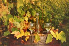 White wine and vineyard autumn season Stock Photos