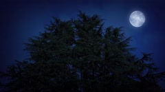 Huge Trees With Moon At Night Stock Footage