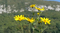Yellow wildflowers swaying in the wind Stock Footage