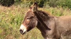 Mule nodding it's head Stock Footage