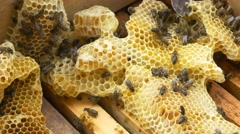 Stock Video Footage of 4k bees beehive beekeeper organic honey pollen honeycomb