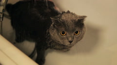 Cute cat in bath tube under shower. Low angle of female person holding young Stock Footage