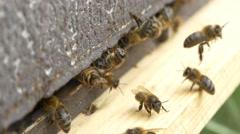4k bees beehive beekeeper organic honey pollen honeycomb close up Stock Footage