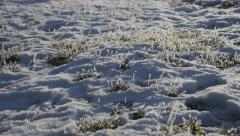 Hoar frost over frozen plants on ground 4K 2160p UHD footage - Frozen plants Stock Footage