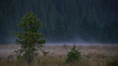 White mist that rises to the early hours of the meadow 12 Stock Footage