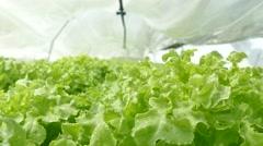 Fog Spray system in hydroponics gardens - stock footage