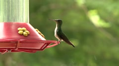 Female White-necked Jacobin feeding on nectar at feeder Stock Footage