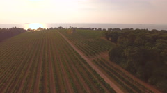 AERIAL: Huge vineyard by the seaside at sunset Stock Footage