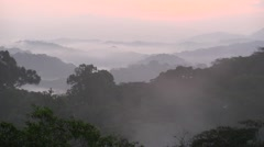 Sunrise over rainforest canopy 1 Stock Footage