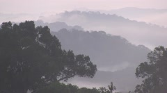 Sunrise over rainforest canopy 3 Stock Footage