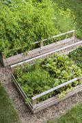 Vegetable garden in raised boxes Stock Photos