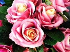 Beautiful roses made with color filters Stock Photos