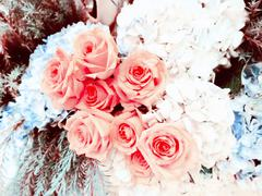 Beautiful roses background made with color filters Stock Photos
