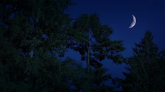 Crescent Moon Above The Forest At Night Stock Footage
