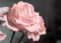 Fading rose pink color close up - stock photo