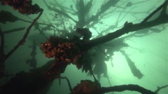 Underwater tree branches surrounded by entities in lake Stock Footage