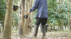 Gardener collecting latex from rubber tree Stock Footage