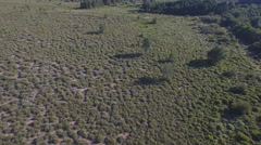 Male deers running in the smoothness, aerial view Stock Footage