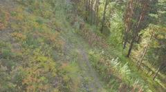 Flight over the forest road Stock Footage