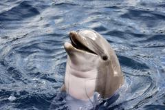 Dolphin Kuvituskuvat