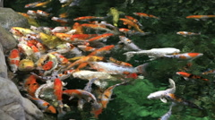 Beautifully decorated artificial pond with Koi Stock Footage