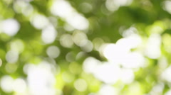 4K Blurred leaves background as sun flares through, shot on Red Epic Dragon Stock Footage
