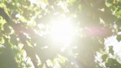 4K Sun beams between green leaves on a bright sunny day, shot on Red Epic Dragon Stock Footage