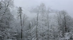 Beautiful snow covered trees in mountains - stock footage