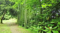 Listokolosnik pubescent bamboo Stock Footage