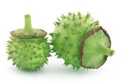 Medicinal Datura fruits - stock photo