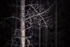 Spooky tree Stock Photos