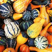 Gourds of different shapes and colors Stock Photos