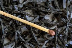One new match closeup, among the matches completely burnt to ashes - stock photo
