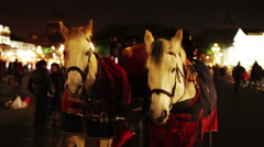 A pair of white horses harnessed to a carriage Stock Footage