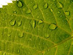 The Green leaf with drop of rain - stock photo