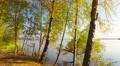 Autumn nature  landscape, POV, walking on forest lake shore, steadicam. Footage