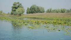 Water channel in the Danube delta 1 Stock Footage