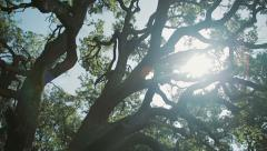 Old tree in the forest Stock Footage
