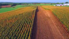Scenic Autumn Heartland Corn Fields at Daybreak, Breathtaking Aerial Flyover Stock Footage