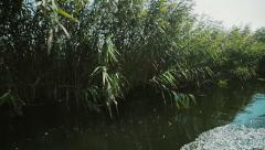 Beautiful day in the Danube Delta Stock Footage