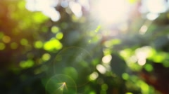 Autumn leaves with sunlight Stock Footage