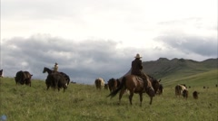 Group of cattle being herded at an Alberta ranch. Stock Footage