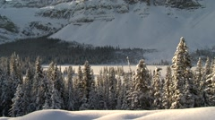 Snow covered pine forest beneath the Rocky mountains in Alberta. (Pan) - stock footage