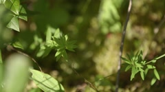 Small shrubs scattered across the floor of Alfred Bog. (Rack) Stock Footage