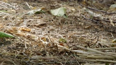 Ants skitter around the forest. - stock footage