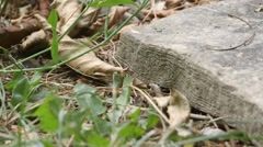 Ants skitter around a large rock version 3. - stock footage