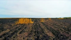 Flying Over Burnt Stubble Field In Russia Stock Footage