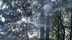 Stock Video Footage of Sun blinking behind  trees with smoke passing by