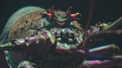 Close Up Lobster Face 02 - stock footage